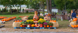 ward's pumpkin patch ridgewood