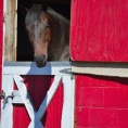 northern new jersey equestrian club