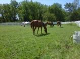 bergen county riding club