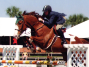 North Jersey Equestrian Clubs Bergen County Real Estate