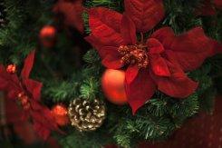 Holiday_6.jpg