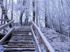 winter-1385956.jpg